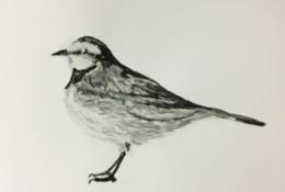 鳥の水彩画 イラスト