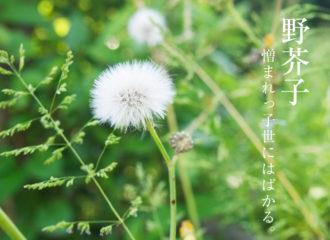 野芥子の花