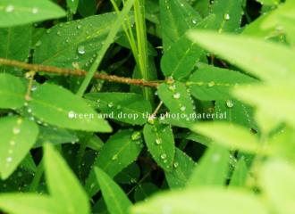 緑と雫の写真