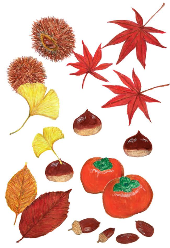 秋のイラストレーション