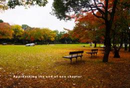 秋の公園の写真