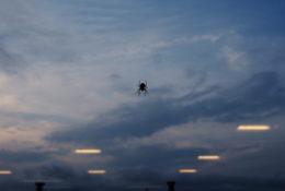 蜘蛛の写真
