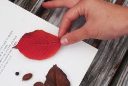 手と本と葉っぱの写真