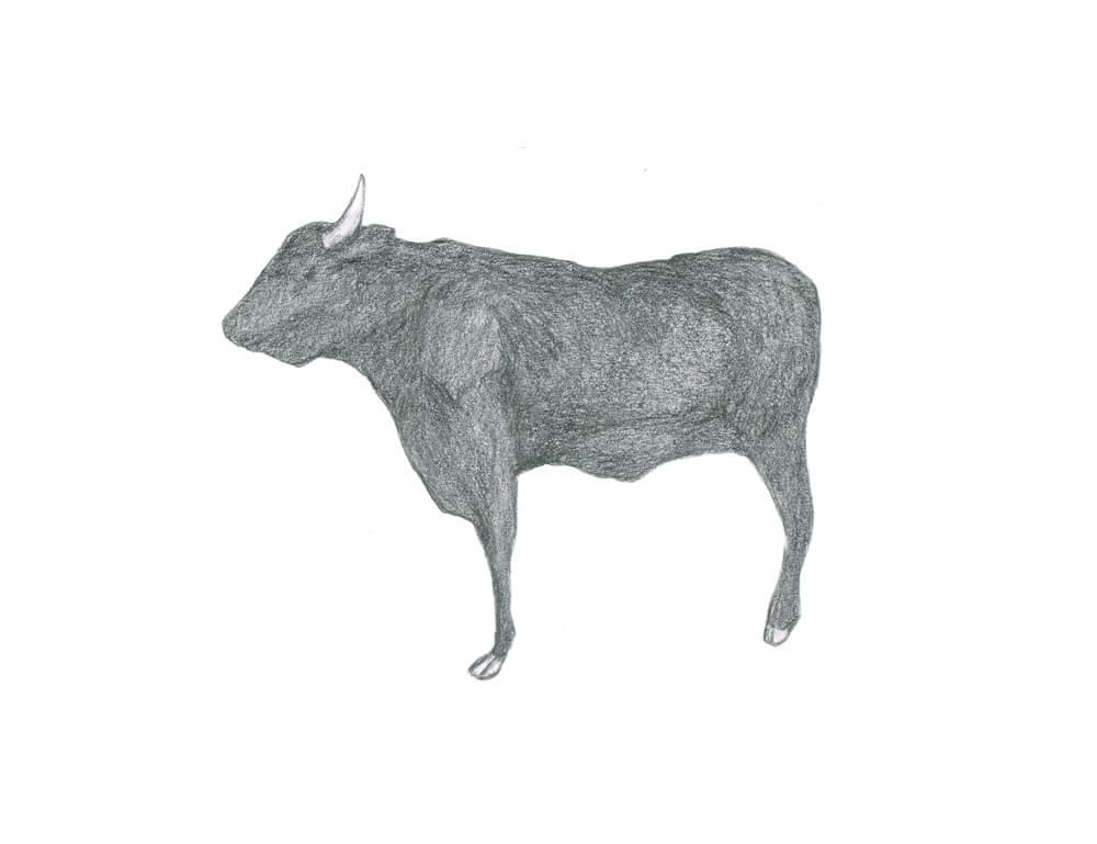牛のイラストレーション