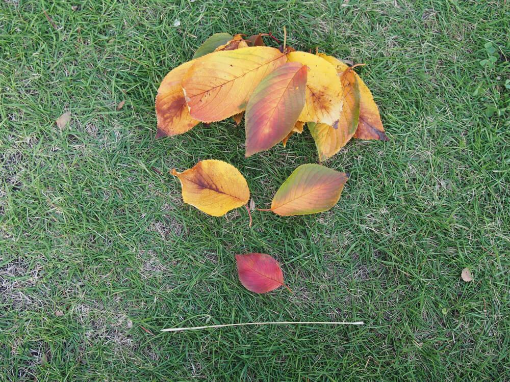 葉っぱ 顔 写真