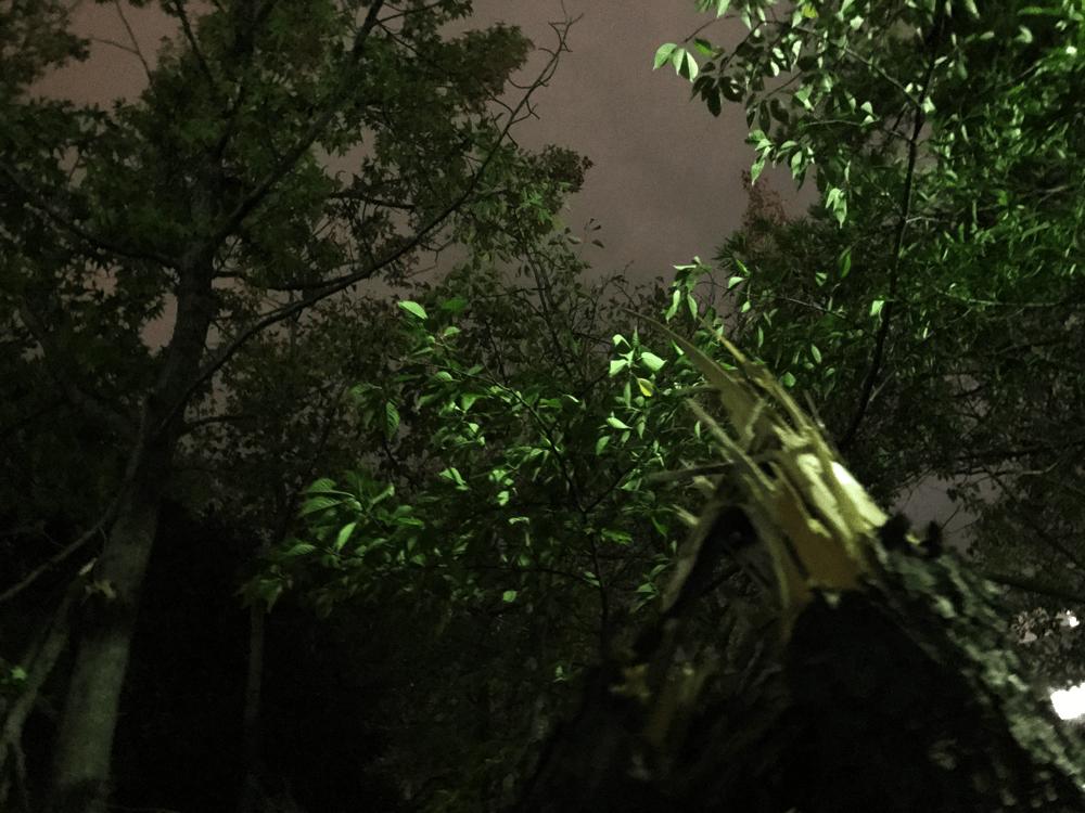 台風による倒木 写真