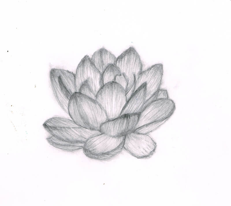 蓮の花 イラストレーション