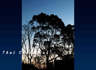 朝焼けの空と木の写真