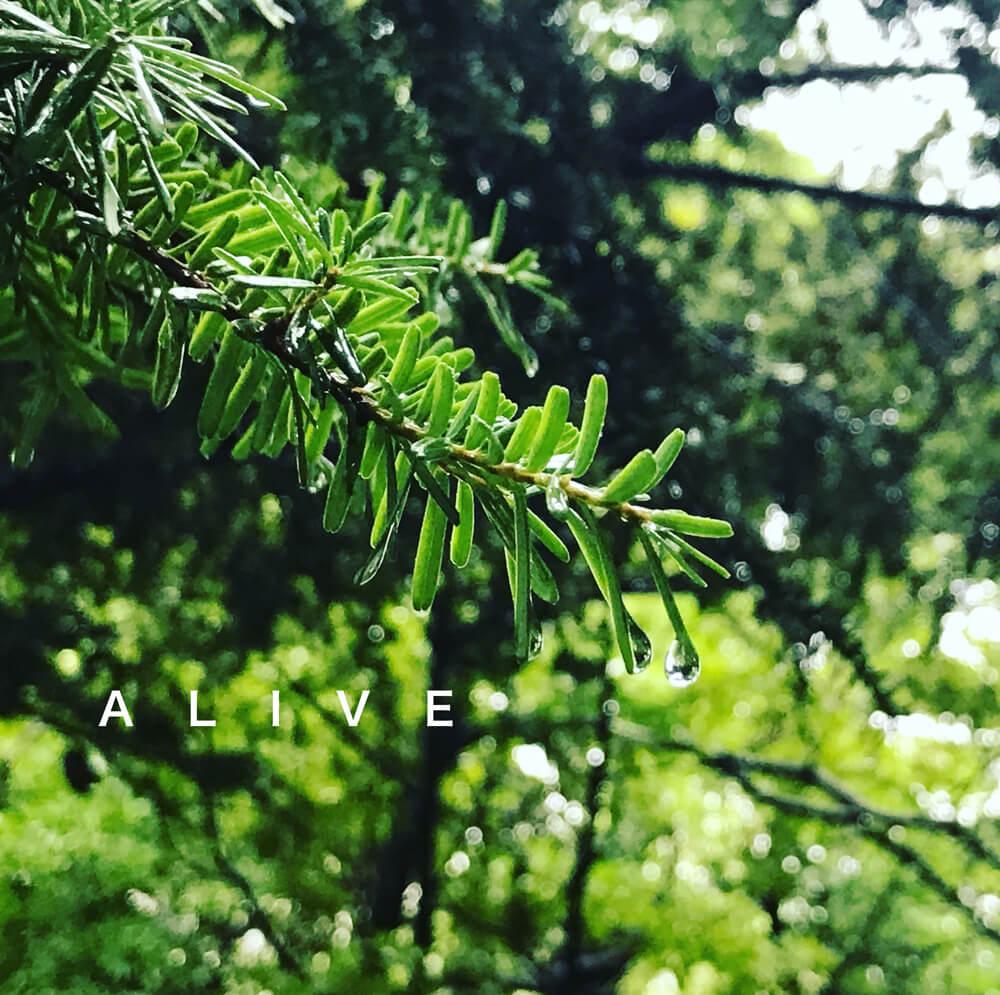 雨上がりの木の枝 写真