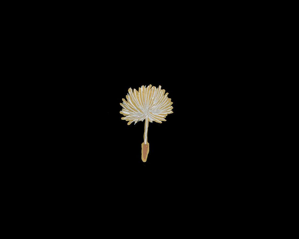 たんぽぽの綿毛のイラストレーション