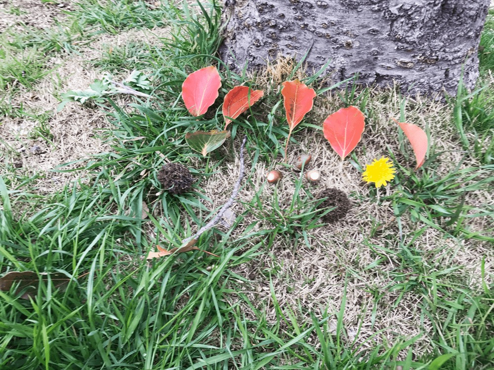 木と葉っぱの写真