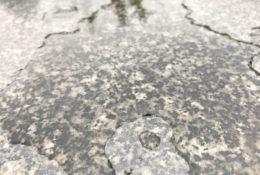 水たまりの写真