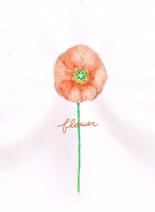 花 イラストレーション