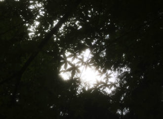 木漏れ日 写真