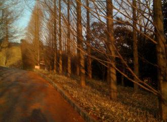 秋の街路樹 写真
